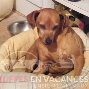 Les truffes en vacances  - Dog sitting